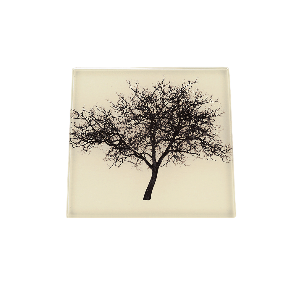 Midsummer-Common-Tree-Toned-Glass-Coaster-new